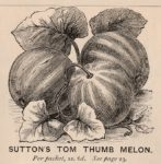 Tom-Thumb-melon-Sutton-1878-147×150