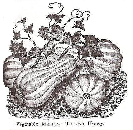 Turquie, Miel de T